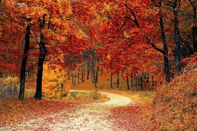 jesieni-podbicie-zaplecz-statlink-256.jpg